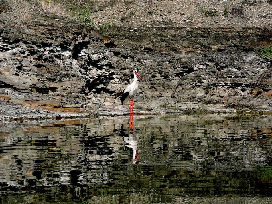 сплави-по-дністру-івано-франківськ-лелека-природа-дністровського-каньйону